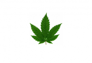 Cannabinoids and MS